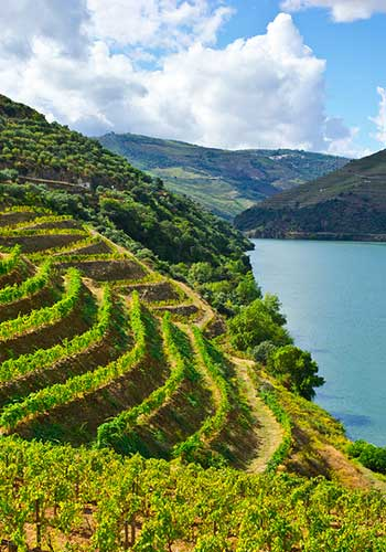 Portugal & Spain: Vineyards along the Douro River